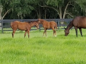 Dangerous Behavior-Flat Out filly and Lady Elite-First Dude colt