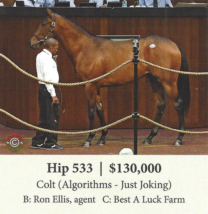 Hip 533 from the April sale purchased by Ron Ellis Agent. Named Babael.