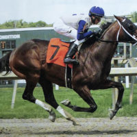 Chilly in Charge wins Crowd Pleaser Stakes