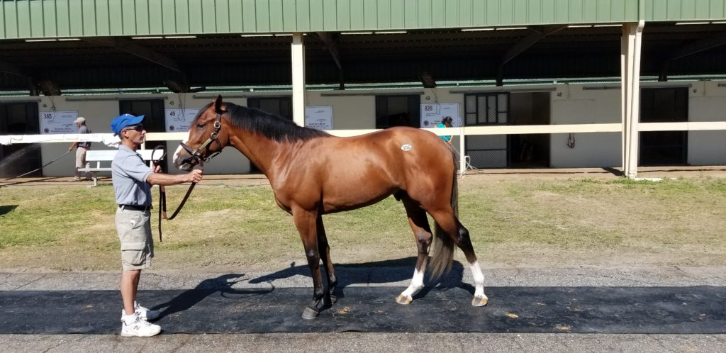 April OBS, Paynter-Majestic Marquet c. SOLD $10,000