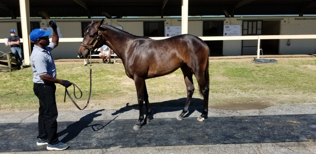 April OBS, Mr. Speaker/Teewees Hope filly sold for $30,000